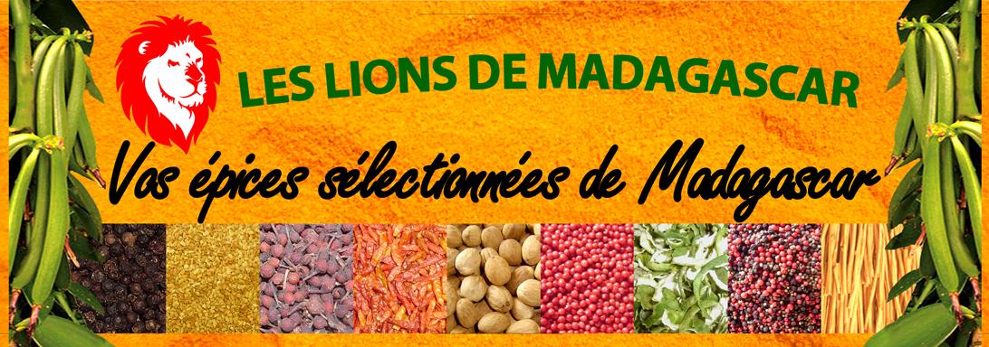 Lions de madagascar